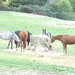 2015-09-18 Peaceful Herd